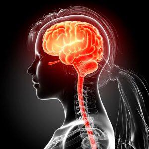 Мозок дорослішає не у 18 а у 30