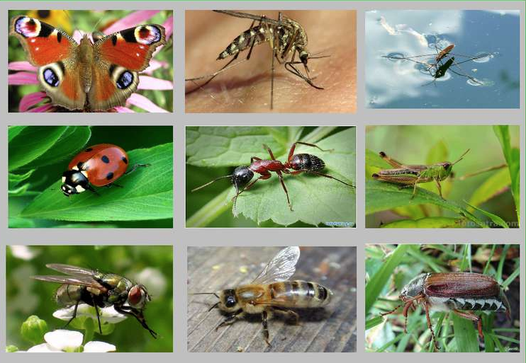 Чи нам потрібні комахи? – ЗВІДУСІЛЬ. Цікаві факти з історії ...